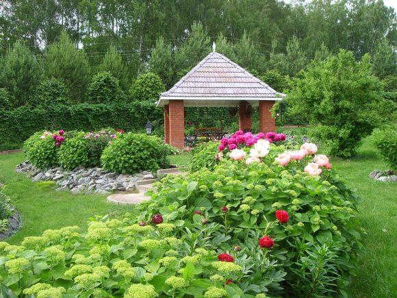Цветущая изгородь из гортензии у садовой беседки