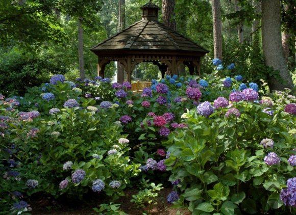 Разноцветная гортензия рядом с беседкой в саду пейзажного дизайна