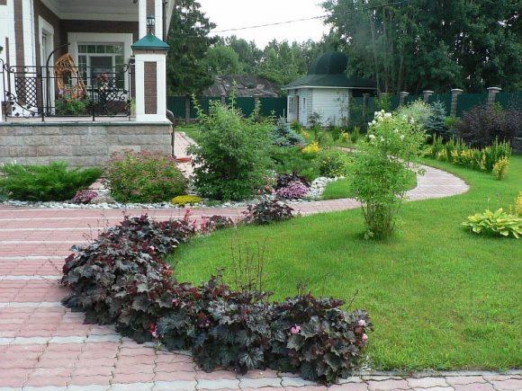 Гейхера на бордюре садовой дорожки