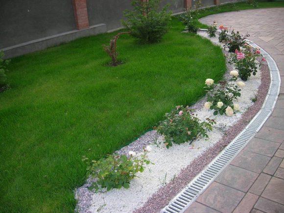 Бордюр из кустовых роз