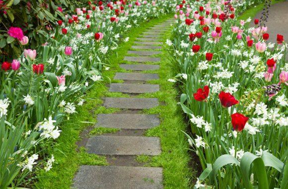 Тюльпаны и нарциссы на бордюре садовой дорожки