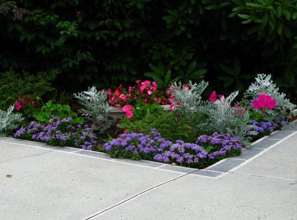 Красивый бордюр из многолетних растений
