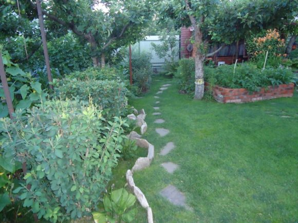 Растительный бордюр из кустов в саду деревенского стиля