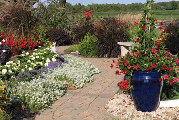 Цветущий бордюр и растения в кашпо