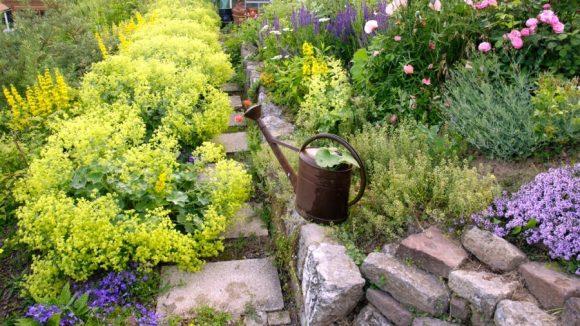 Бордюр садовой дорожки из пряных трав