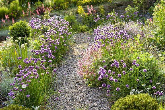 Садовая дорожка в окружении цветущих лекарственных растений