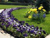 Цветочный бордюр для садовой дорожки
