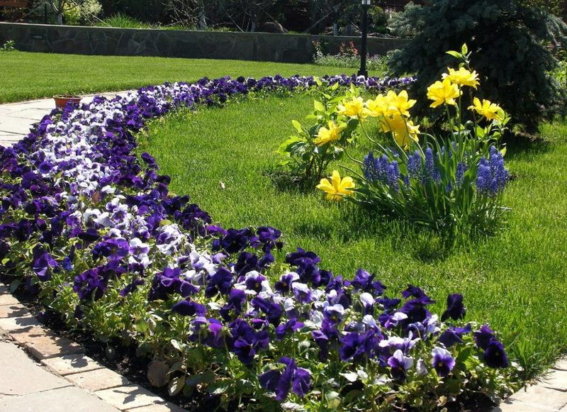 Дизайн растительных бордюров садовых дорожек: советы на фото