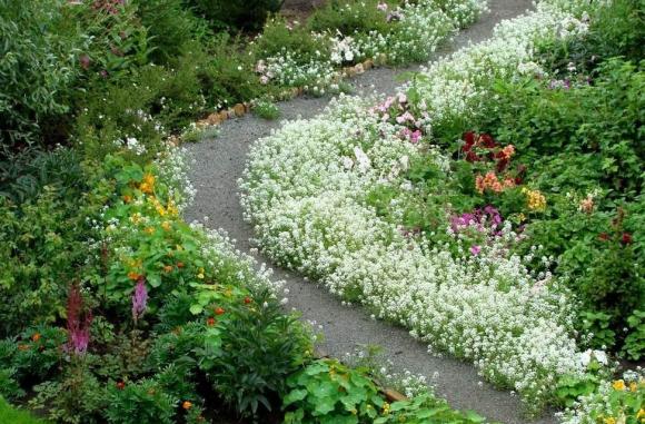Цветочный бордюр из многолетних растений