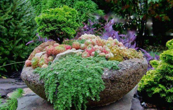 Контейнер с каменной розой в саду