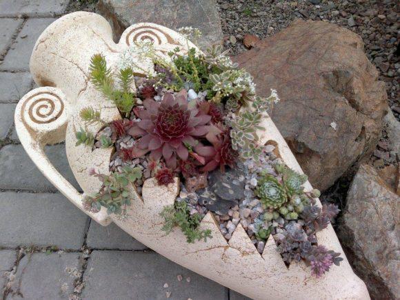 Оригинальная контейнерная композиция из каменной розы