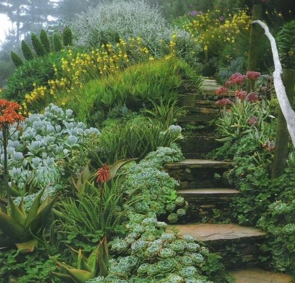 Молодило в саду пейзажного дизайна