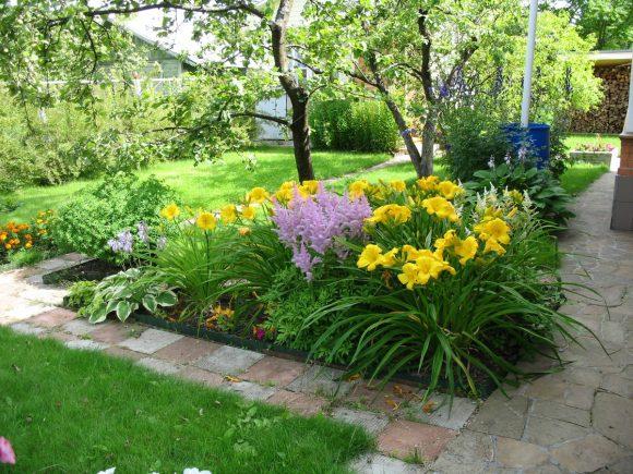 Жёлтые лилейники на садовой клумбе