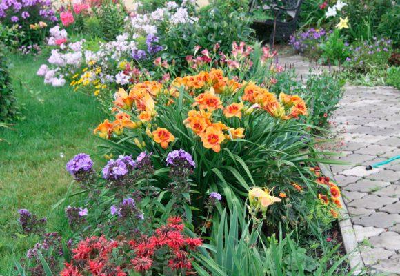 Миксбордер с лилейниками у садовой дорожки