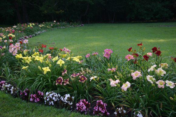 Колоритная цветочная рабатка из лилейников и многолетников