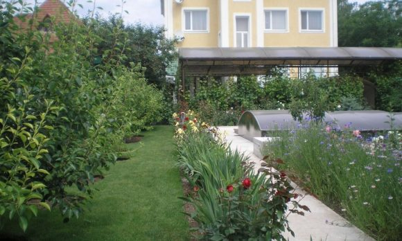 Бордюр садовой дорожки из лилейника и кустовых роз