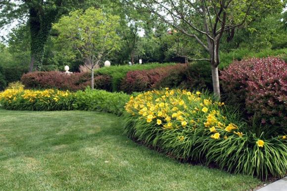 Живая изгородь из лилейников и кустов барбариса