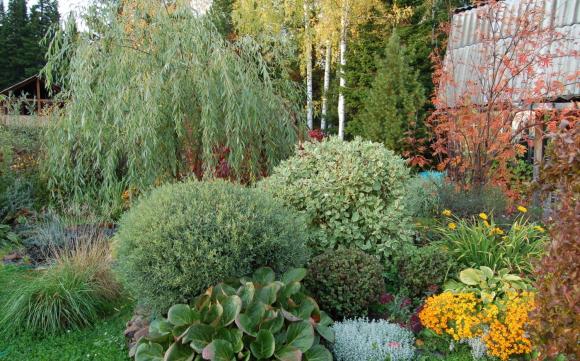 Разные сорта ивы на садовой клумбе