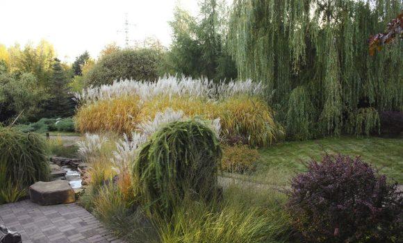 Сад природного дизайна с лесной ивой