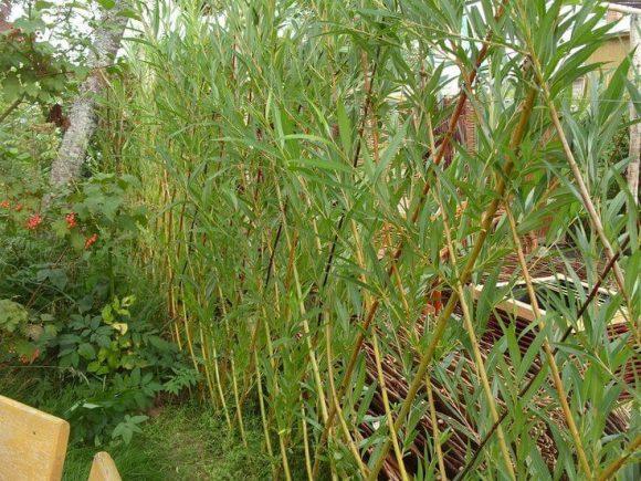 Плетёная изгородь на дачном участке