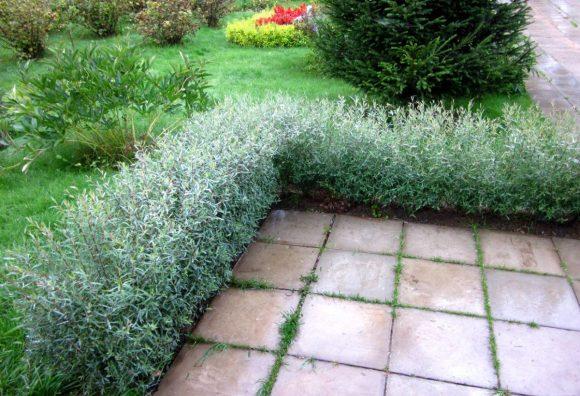 Живописный ивовый бордюр садовой дорожки