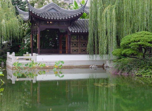 Плакучая ива в саду японского стиля