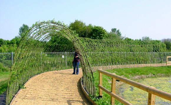 Живая арка из ивы на садовом участке