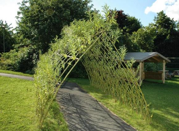 Зелёная ивовая аркада над садовой дорожкой