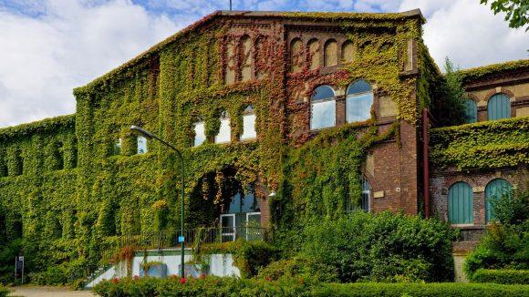Вертикальное озеленение старинного дома