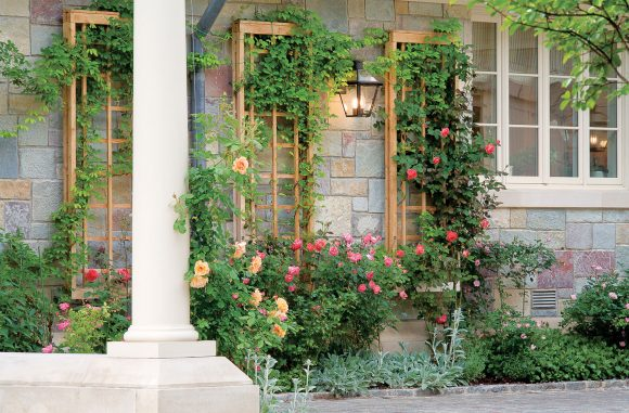 Стена дома с плетистыми розами