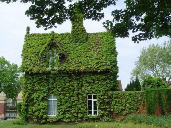 Дачный дом, заросший плющом