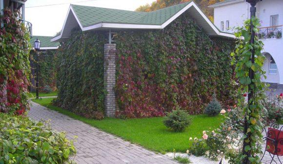 Садовая беседка с вертикальным озеленением