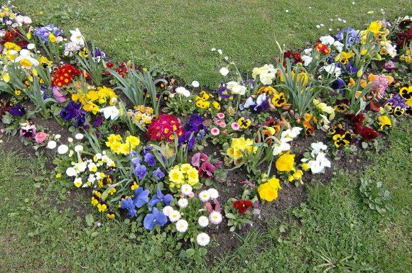 Садовая рабатка из разноцветных анютиных глазок и маргариток