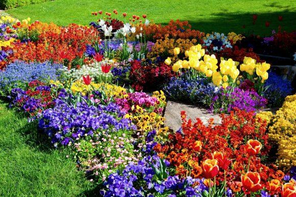 Оформление цветника тюльпанами и анютиными глазками