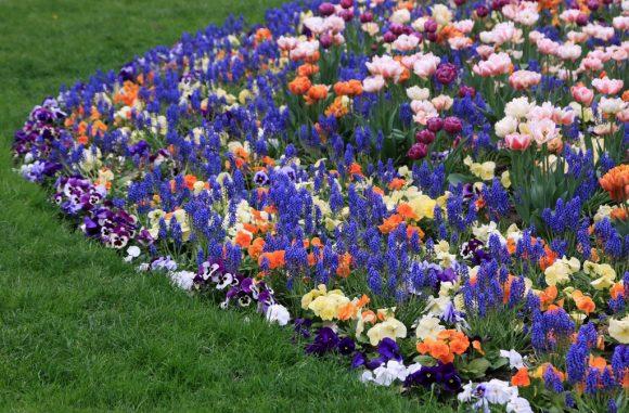 Эффектная клумба из весенних цветов