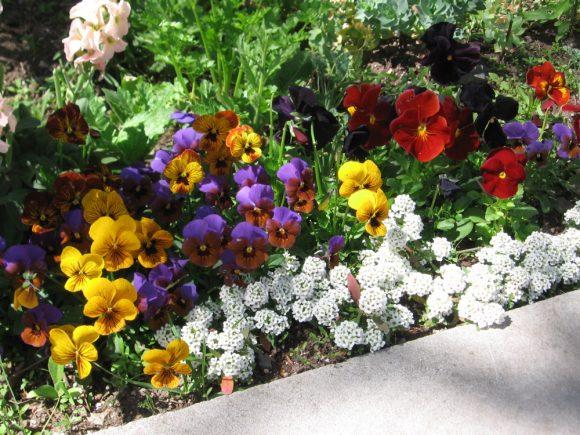 Цветочный бордюр садовой дорожки