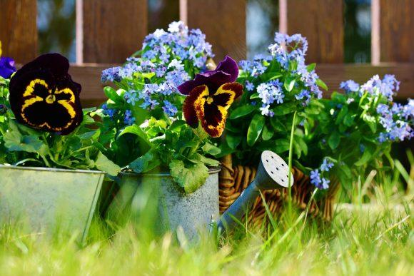 Цветочная композиция в садовой лейке