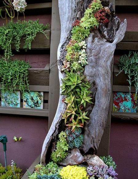 Вертикальная композиция из суккулентов в стволе дерева