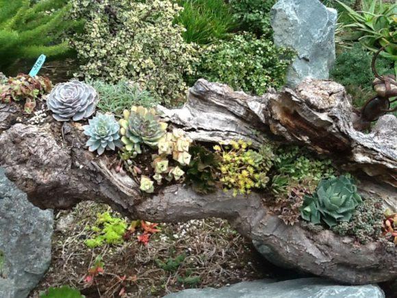 Колоритный рутарий в окружении камней