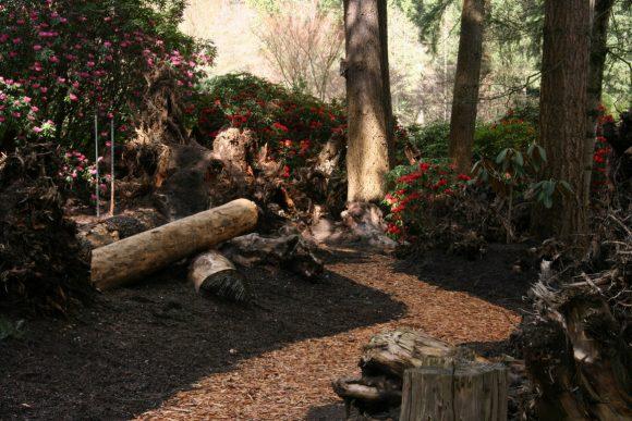 Вариант оформления поляны сада пейзажного дизайна