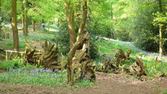 Рутарий в саду природного дизайна