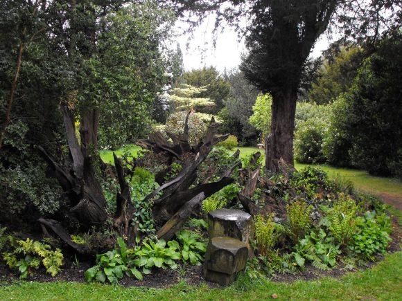 Колоритный рутарий в саду лесного стиля