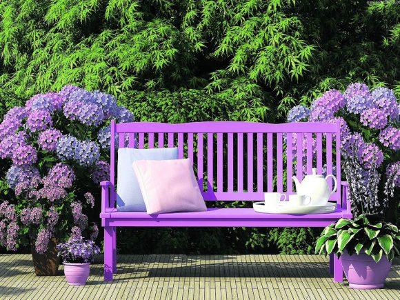 Эффектная гортензия у садовой скамейки