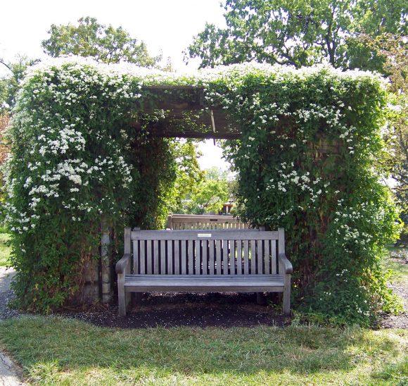 Садовые скамейки под заросшей перголой