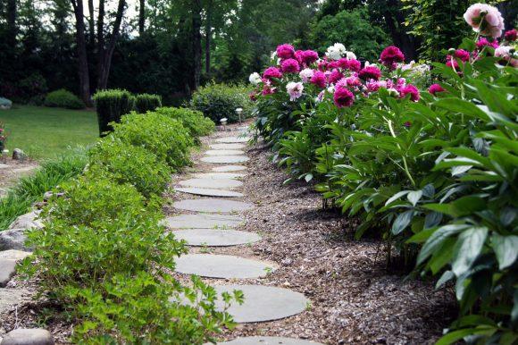 Бордюр садовой дорожки из кустов пиона