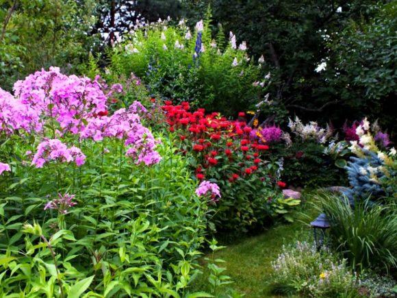 Кустарниковые флоксы в саду природного дизайна