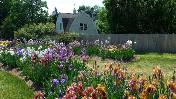 Садовая рабатка с ирисами