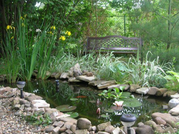 Ирисы в воде садового пруда