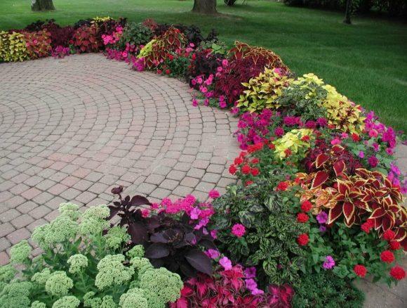 Колоритная садовая рабатка