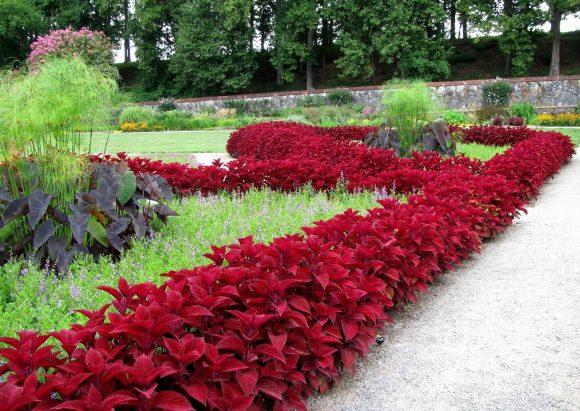 Бордюр садовой дорожки из красного колеуса